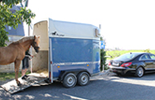 Car with horse trailer